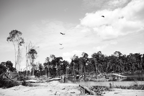 Birds circle a rapidly growing swath of deforested wasteland left behind as miners advance deeper into the jungle.