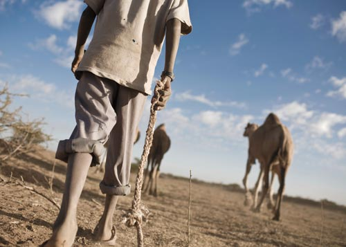 Camels walk across the dusty scrub. A boy walks behind them, legs covered in dirt, carrying a rope.