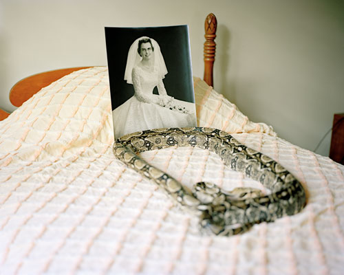 A bed with a black and white picture of a woman without a frame and a large snake sitting atop it.