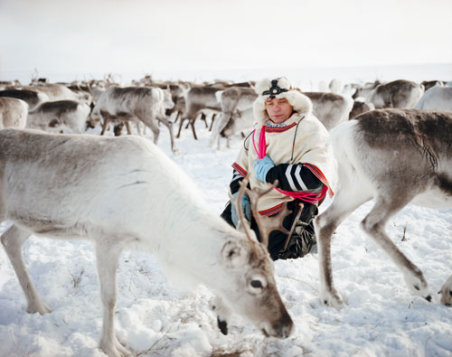 Reindeer herder Nils Pedar A.  Gaup sitting with his reindeer  in Kautokeino, Norway