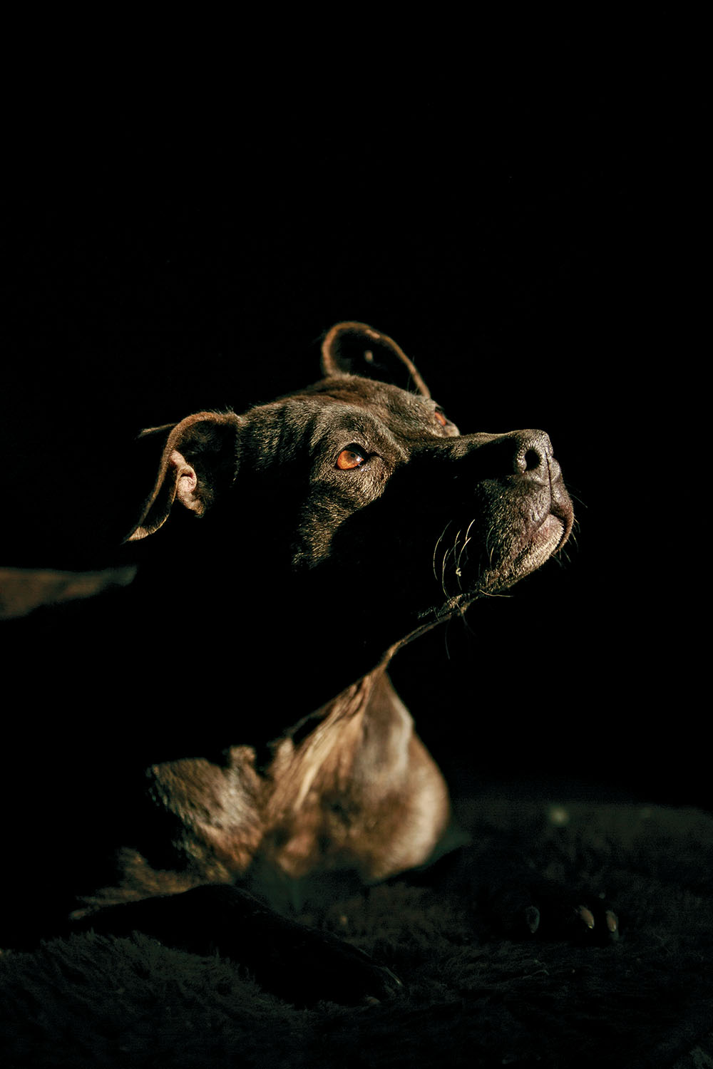 c7865698f1b3 In defiance of those who believe that a softened image will save the dogs   lives