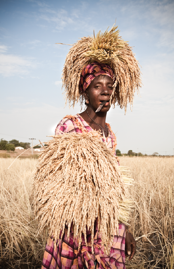 Hawa Jallow is a member of the Santa Yalla kaffo, a collective of women who harvest rice near the Gambia River at Kaur. After cutting the rice, she uses her head and hands to carry it to a collection point at the edge of the field.