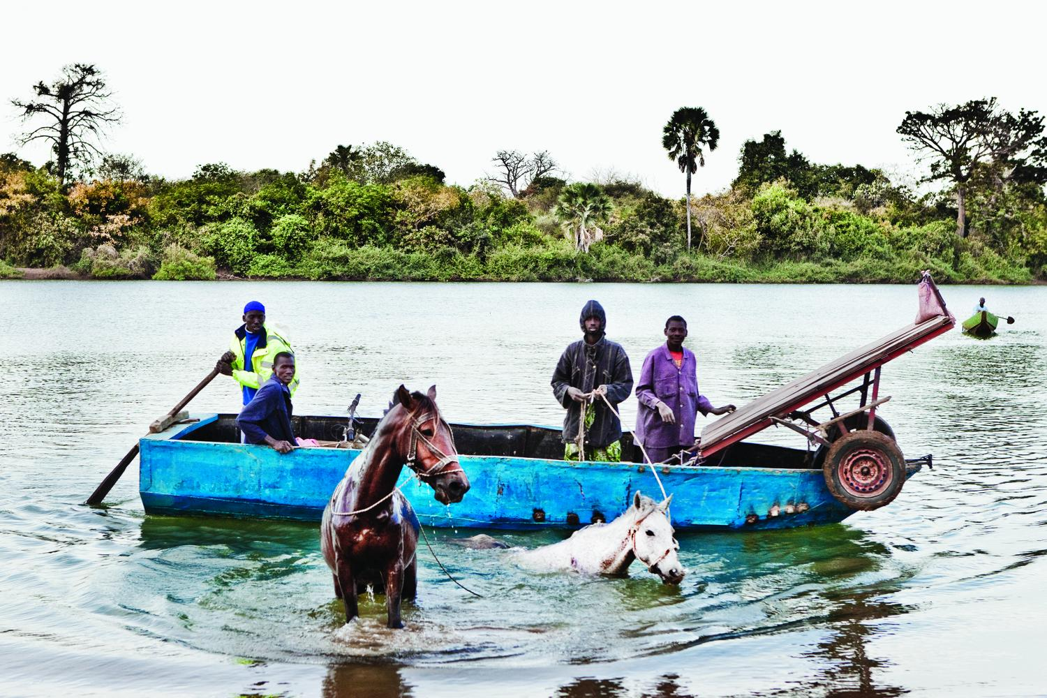 Men from the Fula Tribe swim their horses across the Gambia River on their way to market.