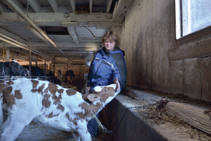 Carol French on her dairy farm, taking care of her milk cows.