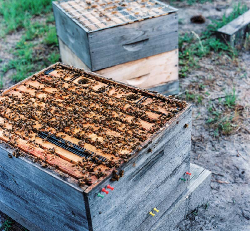 In all, Silver Spoon Apiaries runs nearly a dozen bee yards, caring for millions of bees.