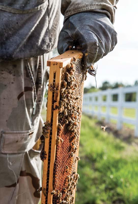 The Accidental Beekeeper | VQR Online