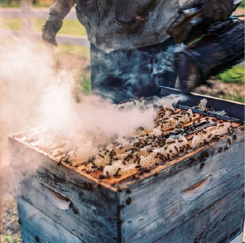 In order to get to the honey, they use smoke to drive the bees away.
