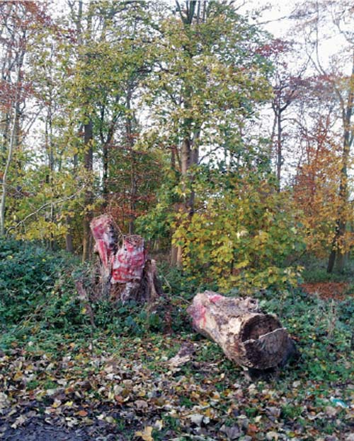 Felled Woldgate Totem (2012). (Rob Robel)