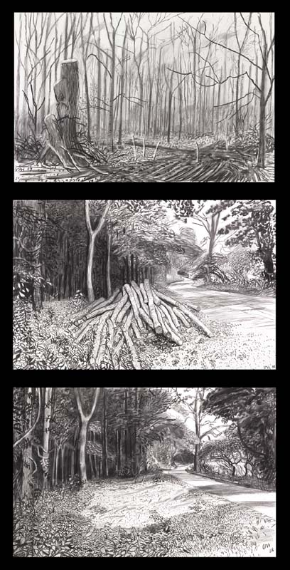 "Three of Hockney's five charcoal-on-paper sketches of his felled hero. Top: Untitled III(2009), 26 x 40"". Middle: Cut Trees-Timber (2008), 26 x 40.25"". Bottom: Timber Gone (2008), 26 x 40.25"". (Richard Schmidt)"