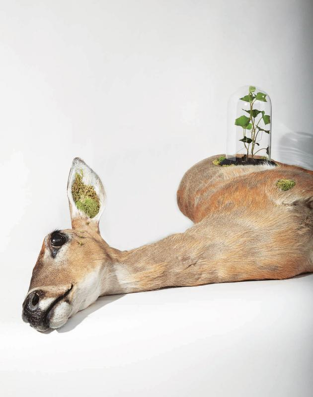 Katie Innamorato, Cannulated Doe Terrarium, from Taxidermy Art by Robert Marbury (Artisan Books, 2014).  (Photograph by Robert Marbury)
