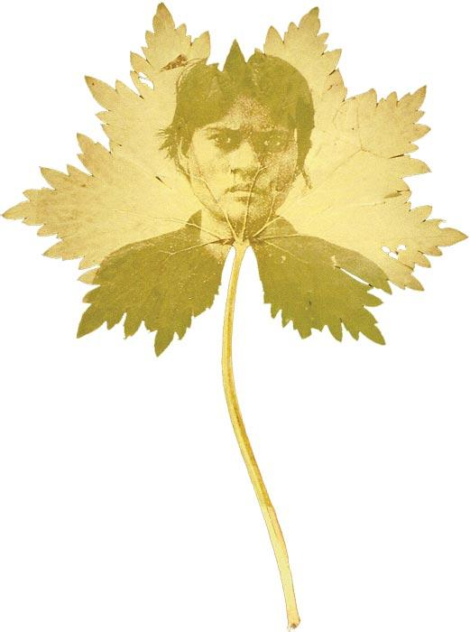 Binh Danh, <i>Found Portrait #18</i>. Photographic negative on leaf.