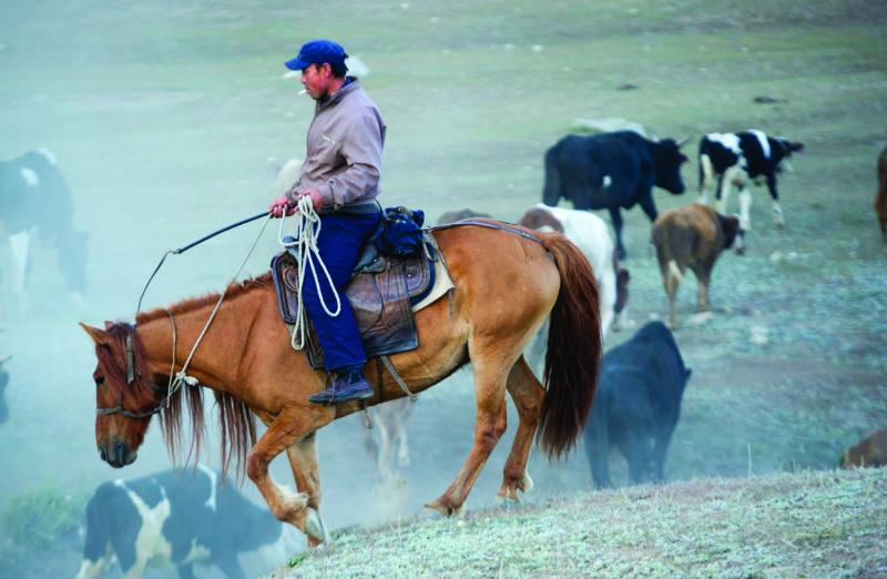Kazahk nomads are cowboys who run cattle, sheep, goats, and camels through the park.