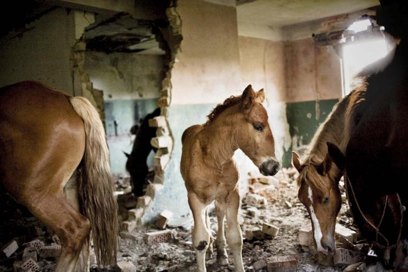 Horses wandering among the ruins of one of the many abandoned, tumbledown houses in Rosia Montana.