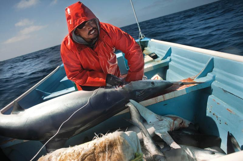 Fishing for blue shark near Baja California.