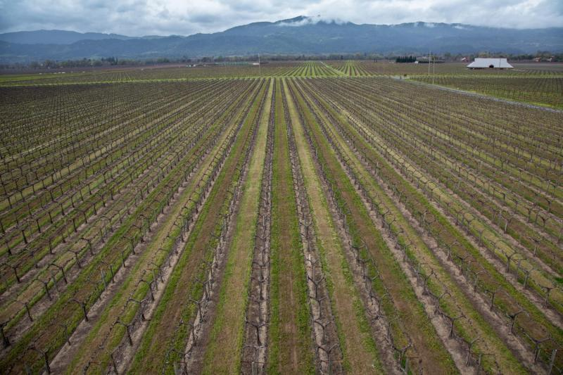 Beckstoffer vineyards, Napa Valley. (©Peter Menzel / www.menzelphoto.com)