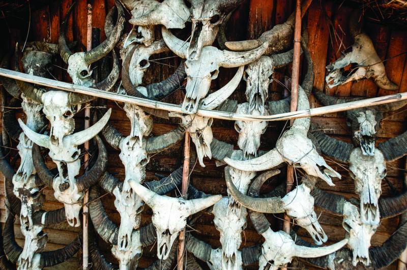 Water buffalo and mithan skulls hanging on the exterior wall of a home in Pansar indicate the owner's status as a rich man who has given many Feasts of Merit.