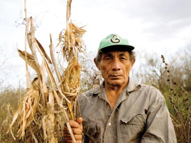 Eduardo Romero Martín grips a desiccated stalk in his cornfield in Pocoboch, Mexico.